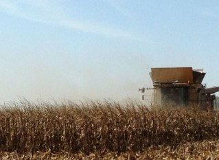 Kansas Growers Post High Yields in National Corn Yield Contest