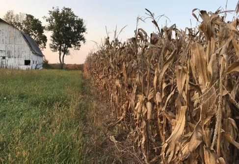 Kansas to Harvest Second Largest Corn Crop