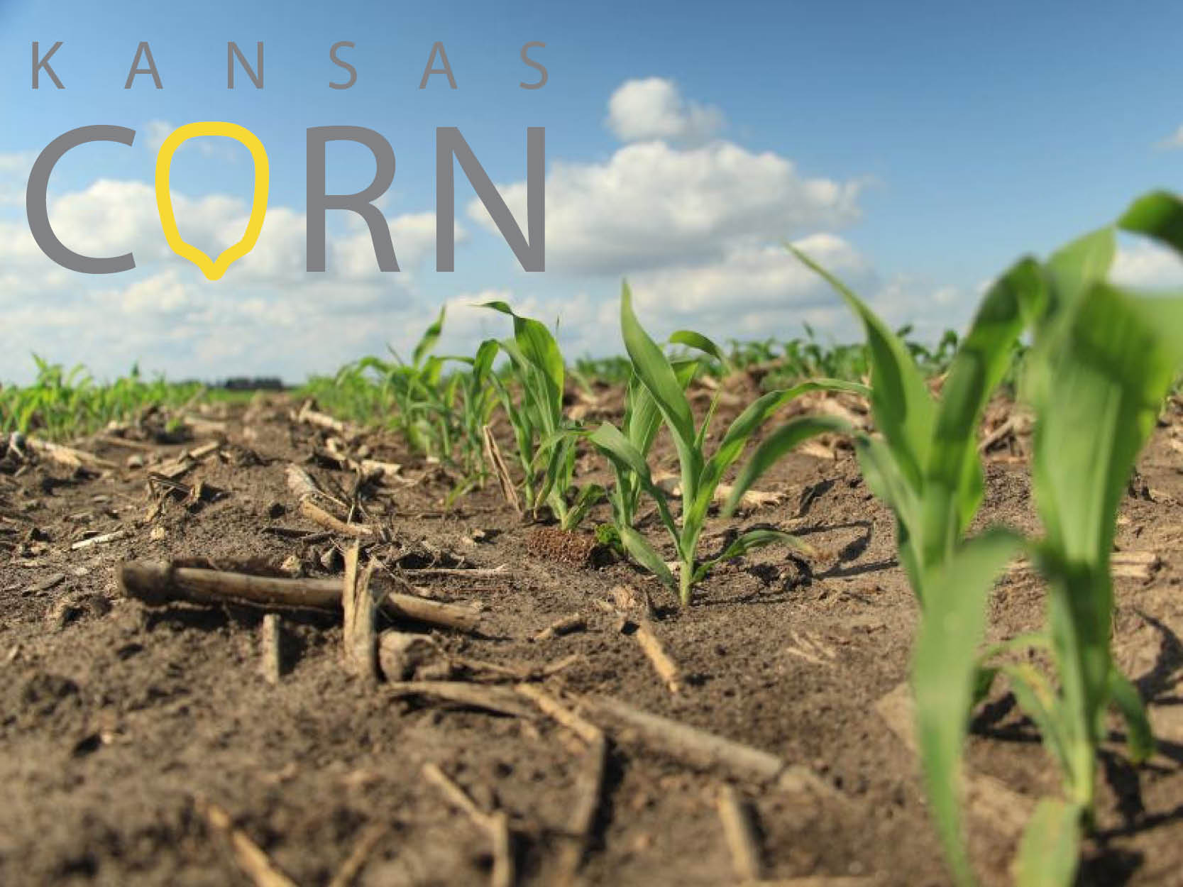 Kansas Growers to Serve at Corn Congress
