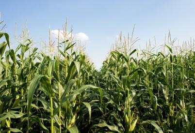 Kansas Corn Praises Sen. Roberts and Rep. Pompeo's Leadership to Pass GMO Labeling Bill in Senate, House