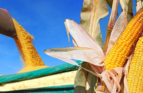Kansas Leader Joins Nation's Corn Growers for Policy Review