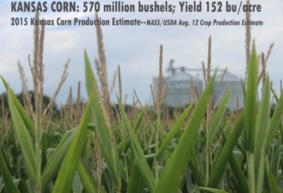 August Estimates Show Good KS Corn Crop