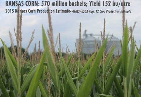August Estimates Show Good KS Corn Crop