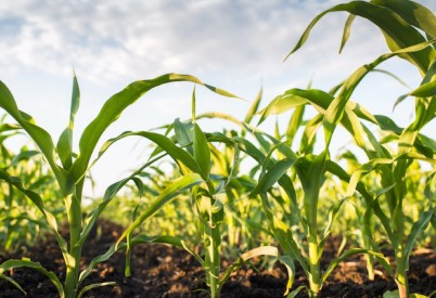Kansas Corn on Tariffs on Mexico, Canada and the E.U.
