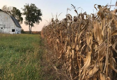 Kansas Corn Disappointed with Penny from USDA Trade Aid