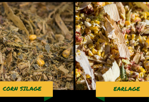 The New Debate: Silage v. Earlage