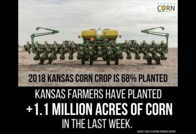 June 25: Kansas Corn Crop Progresses