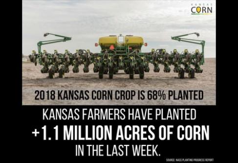 May 21: Kansas Corn Planting at 82%
