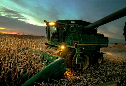Kansas Corn Crop Shows Positive Progress