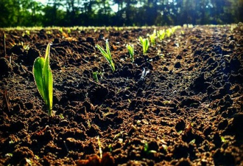 KCGA, Corn Farmers Submit Atrazine Comments