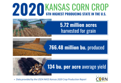 Kansas Farmers Harvest Second Largest Corn Crop