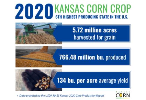 Kansas Farmers Harvest Second Largest Corn Crop