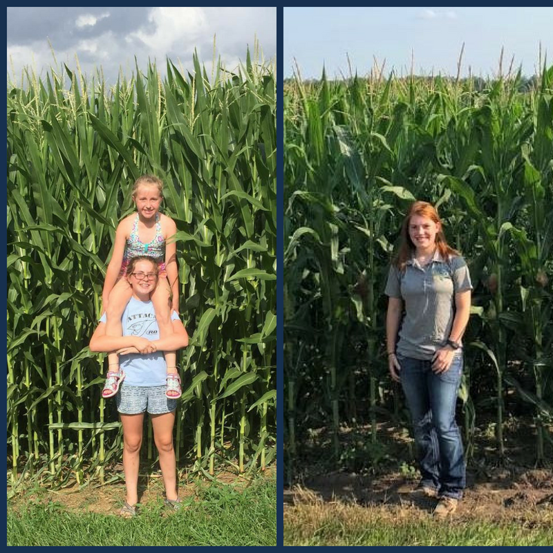 Knee High By 4th Of July Or Not Ks Corn