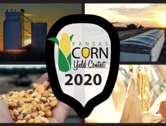 Yield Contest 2020 Web