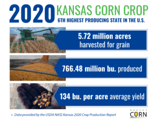 Copy Of Copy Of 2019 Kansas Corn Crop