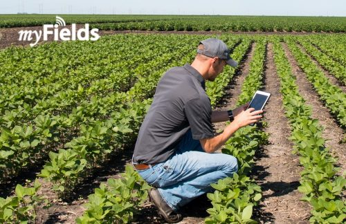 KS-Corn-Research-Funding-Research-K-States-Innovative-Web-App-myFieldsinfo-image