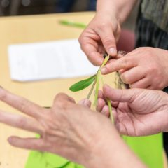 Seed To STEM Workshop Maize 060419 16 Explore Corn (10)